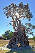 19th Mar 2018 - The Herbig Tree