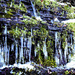 Icicles ,brrrr.... by snowy