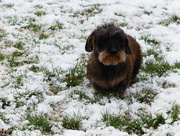 20th Mar 2018 - Digsby In The Snow