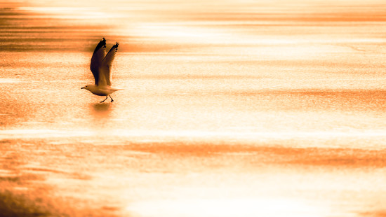 cleared for take-off by northy