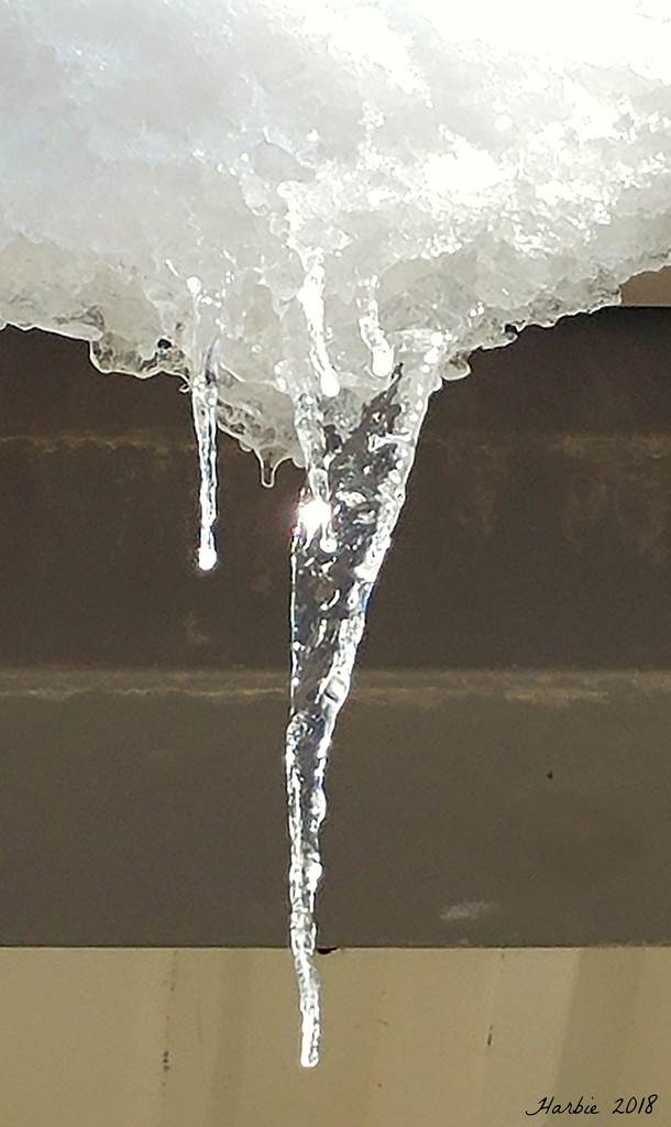 Icicle (1st Day of Spring) by harbie