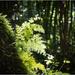 Puketoki Reserve