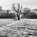 The Black Tree by rjb71