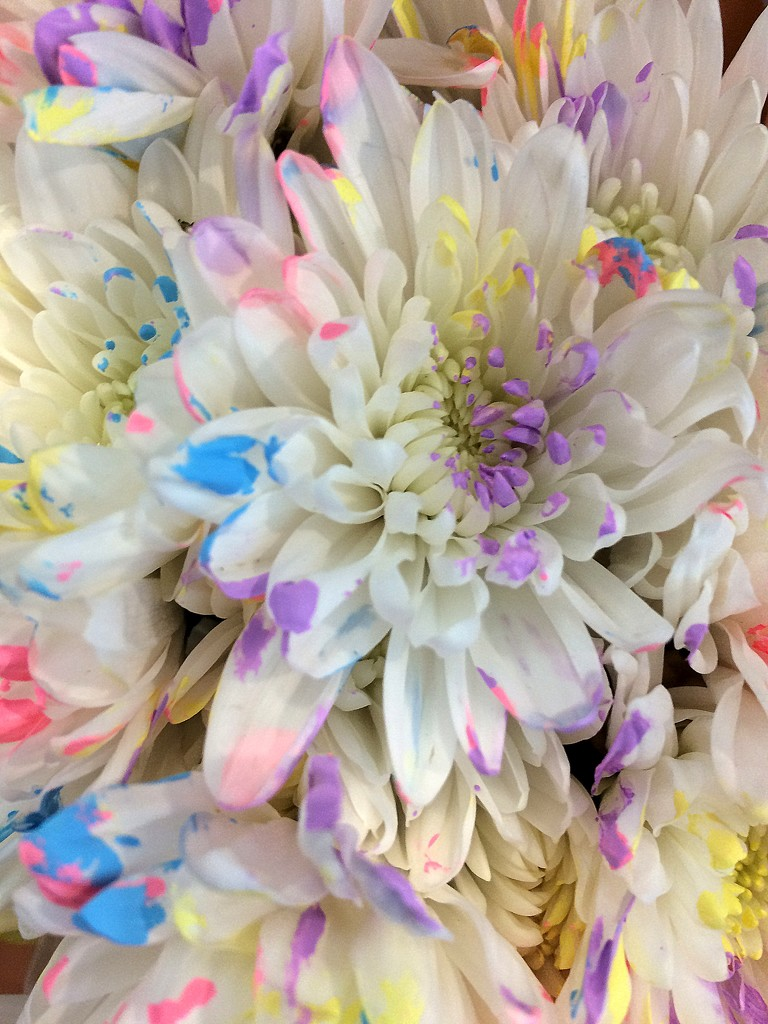 White rainbow flowers by homeschoolmom