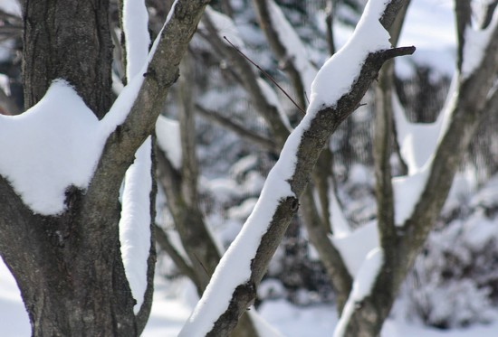 Snow on tree limbs by mittens