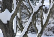 22nd Mar 2018 - Snow on tree limbs