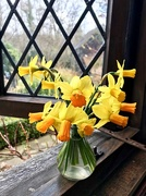 22nd Mar 2018 - Daffs