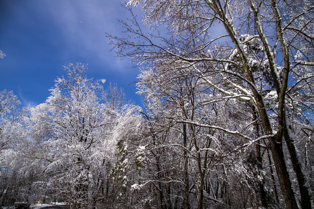 Blue Sky and White Snow by hjbenson