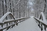 22nd Mar 2018 - Winter's Last Hurrah