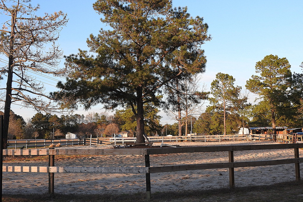 Welcome to the Sandhills! by homeschoolmom