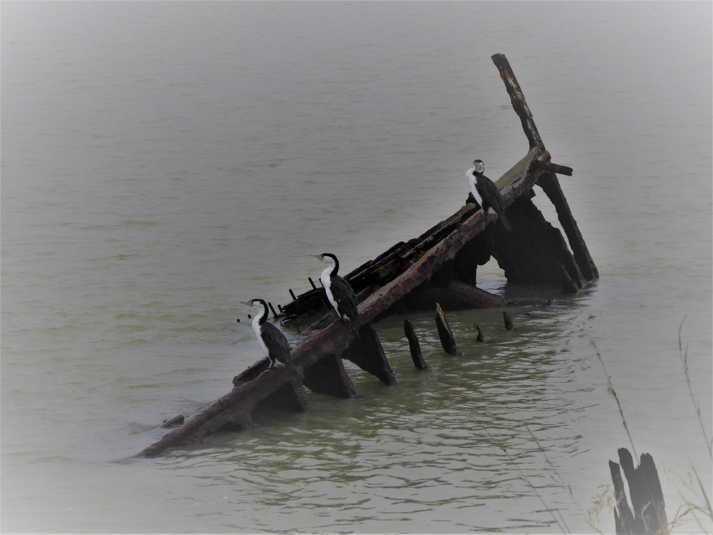 New use for an old shipwreck by maureenpp