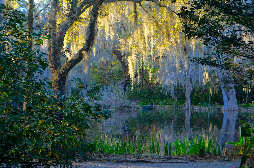 Afternoon light, Magnolia Gardens by congaree