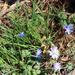 Roadside Flora