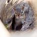 Chipmunk in a log