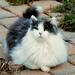 Okabi Being Fluffy