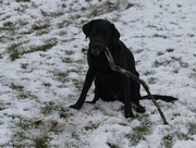 24th Mar 2018 - This Is My Stick
