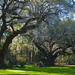Live oaks, Magnolia Gardens by congaree