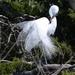 Egret by kathiecb