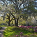 Middleton Place Plantation and Gardens, Charleston, SC by congaree