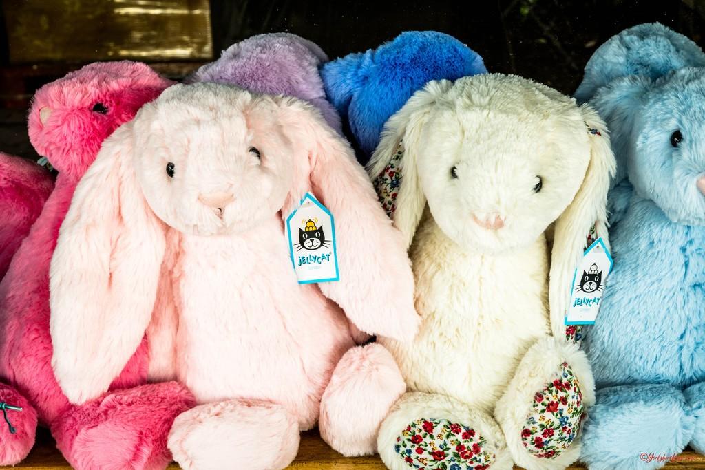 fluffy bunnies by yorkshirekiwi