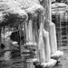 Icicles  by radiogirl
