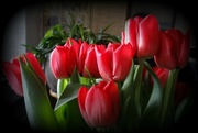 28th Mar 2018 - red tulips