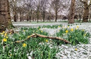 19th Mar 2018 - Spring snow in Green Park