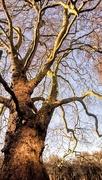 26th Mar 2018 - Bare tree