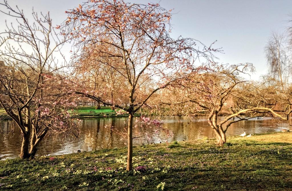 St James's Park lake by boxplayer