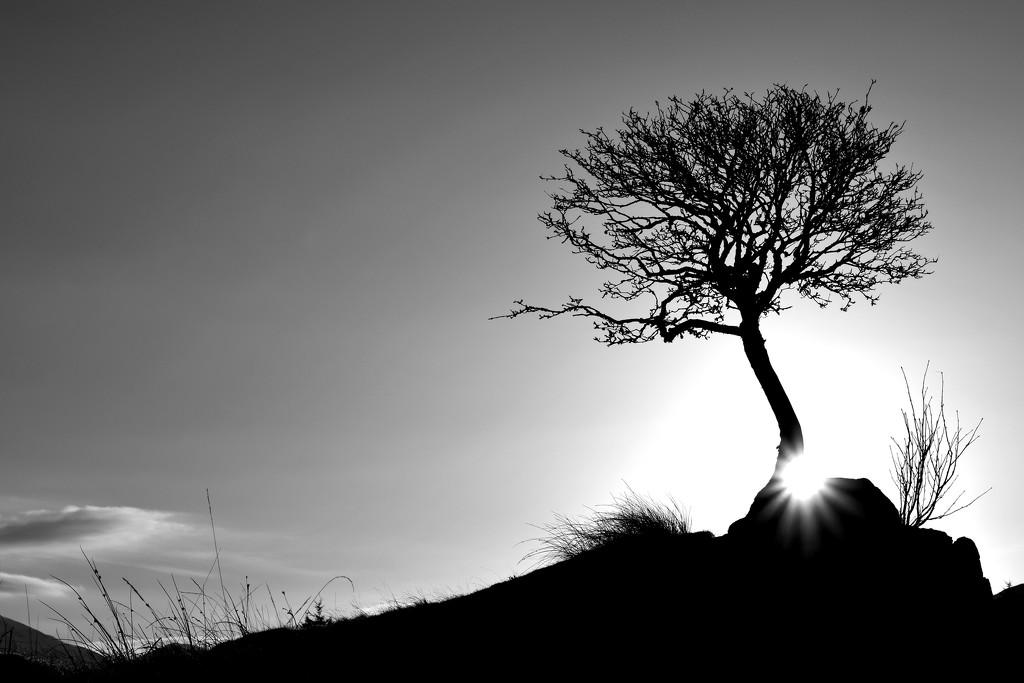 monochrome sunrise by christophercox