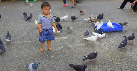 A boy among the pigeons  by gilbertwood