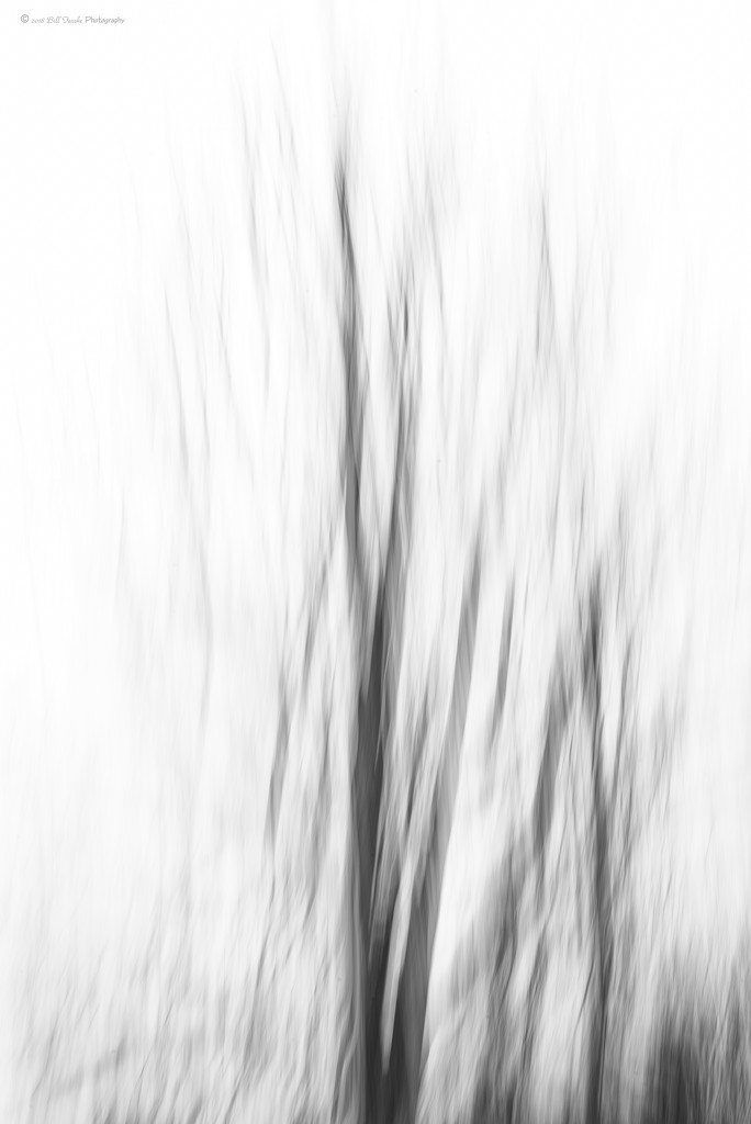 Winter Tree by bill_fe