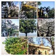30th Mar 2018 - Mumbai's trees