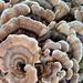 Technicolour Fungus