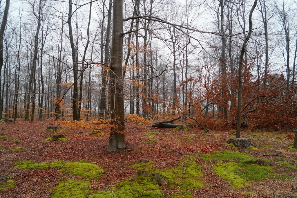 forest by gijsje