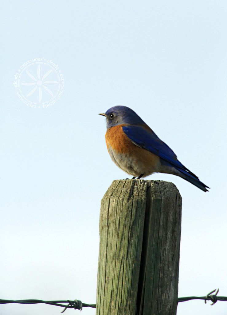 The Bluebirds are Back by gq