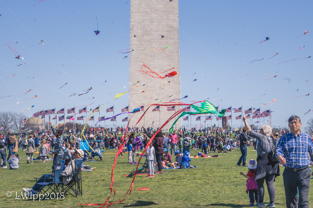Let's Go Fly A Kite  by lesip