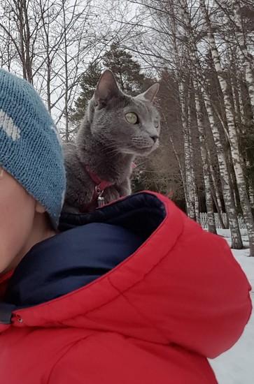 Carry-on cat by katriak