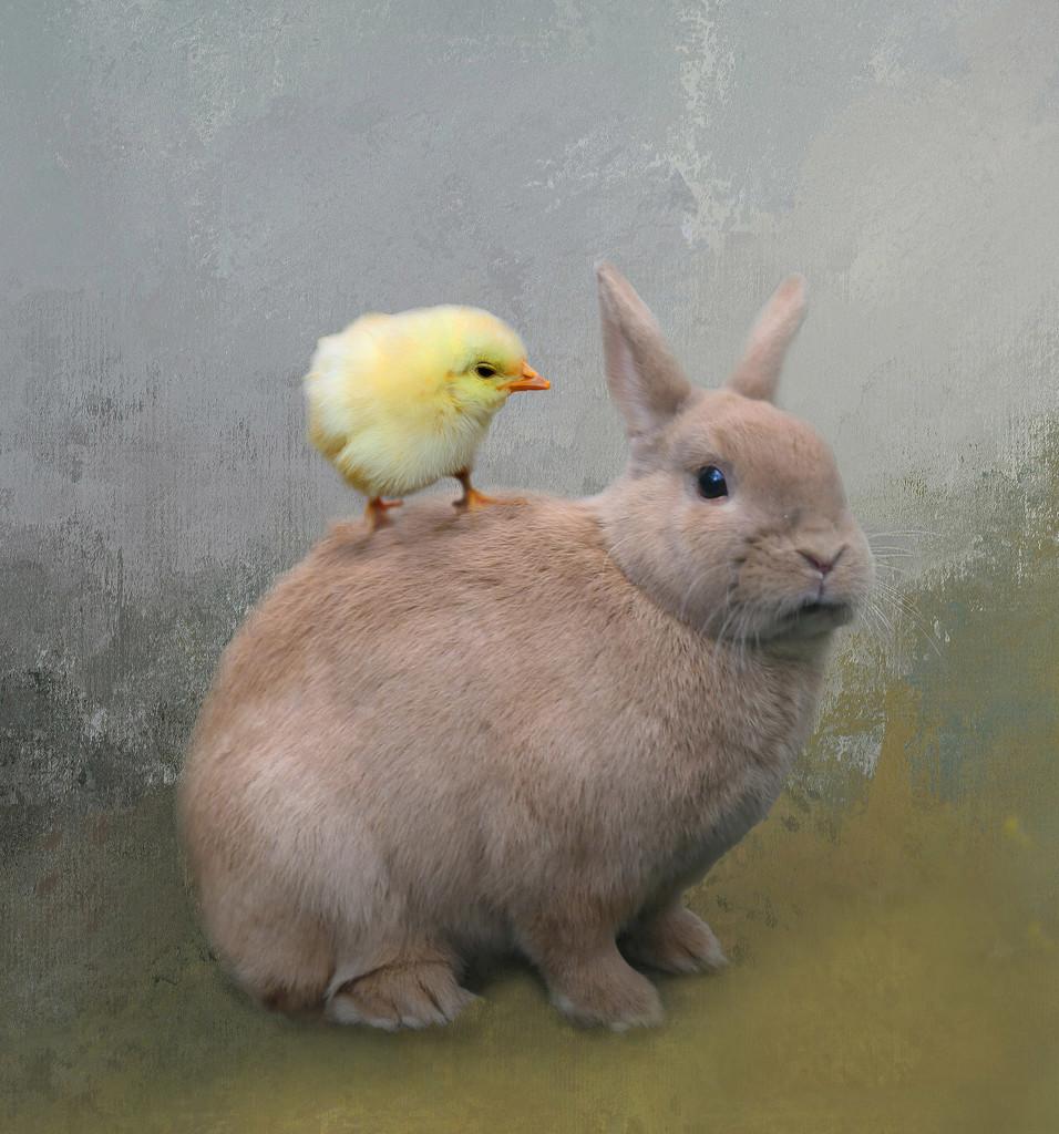 Hoppy Easter by jesperani