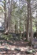 1st Apr 2018 - Peeking from the trees