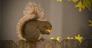 1st Apr 2018 - Squirrel Eating Healthy!