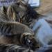 nap on my lap by parisouailleurs