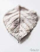 23rd Mar 2018 - Just a leaf…