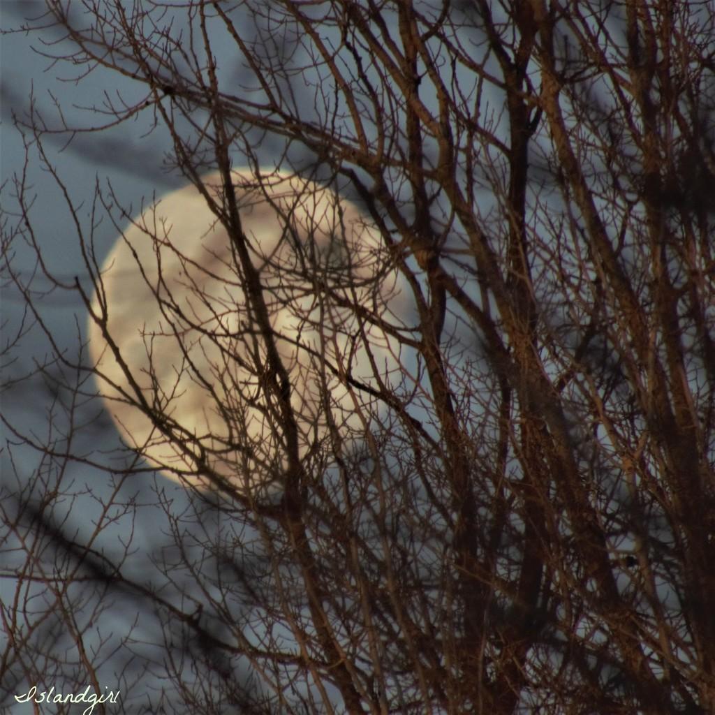 Peek A Boo Moon  by radiogirl