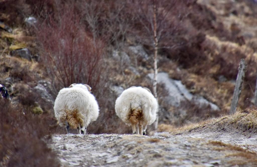 A Country Walk by casablanca