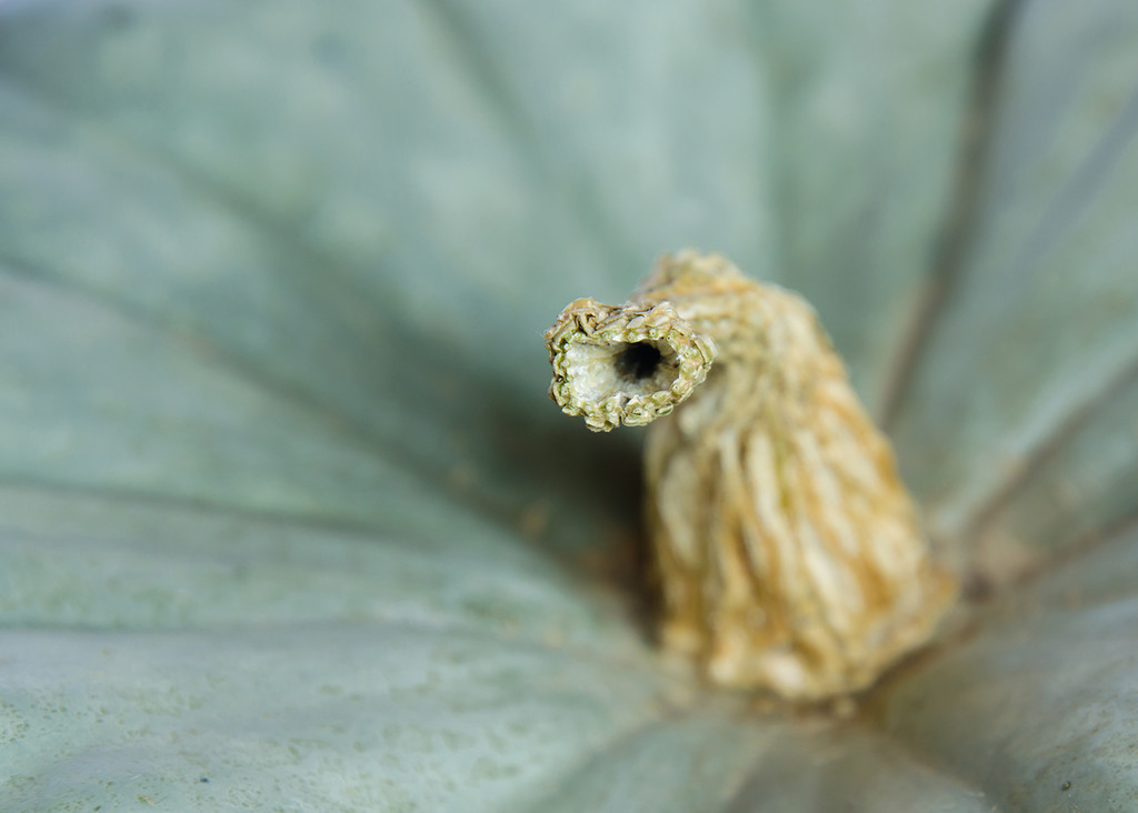 Pumpkin Stalk by salza