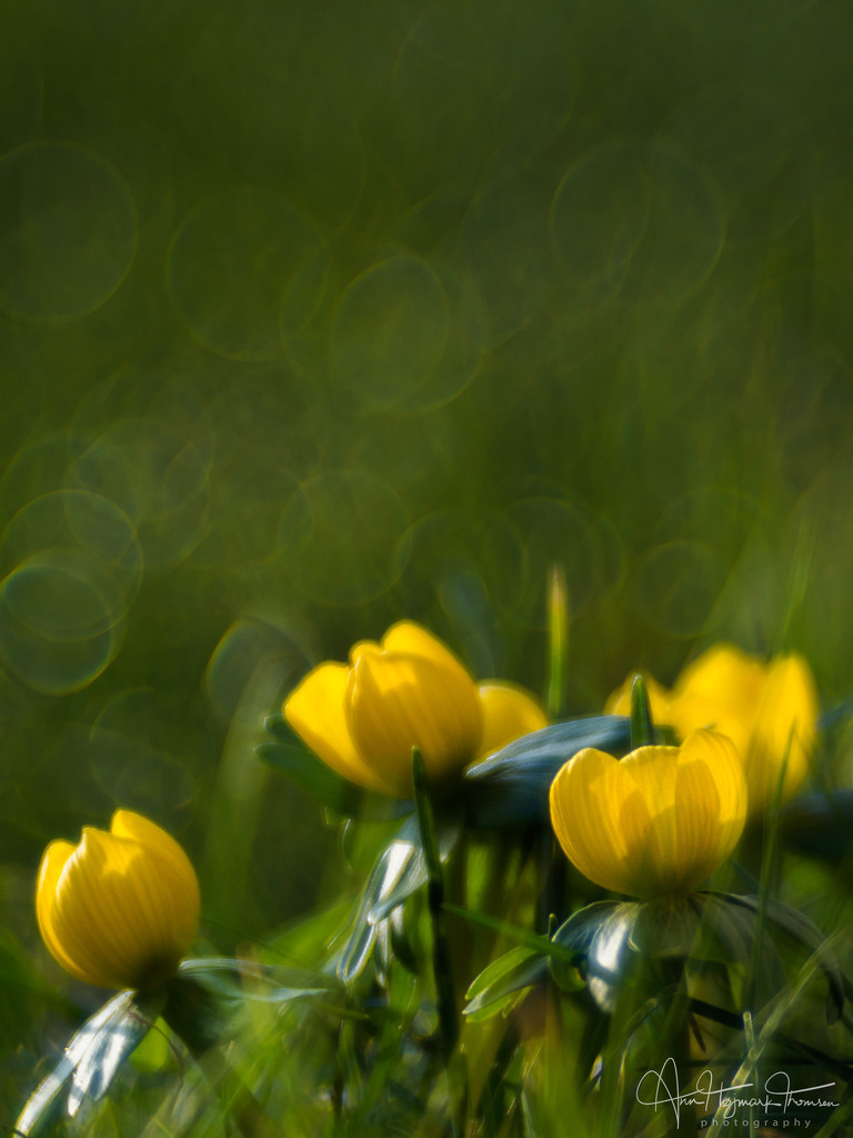 More evidence of spring… by atchoo