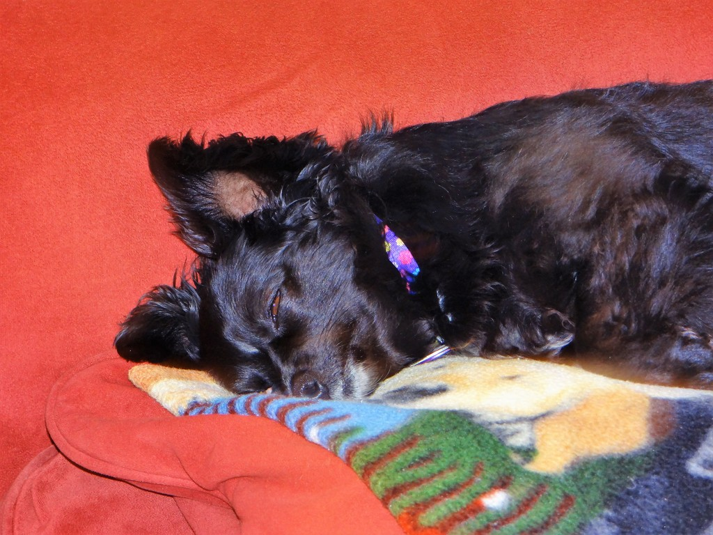 A Good Day To Nap by brillomick