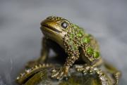 2nd Apr 2018 - green-eyed lady...