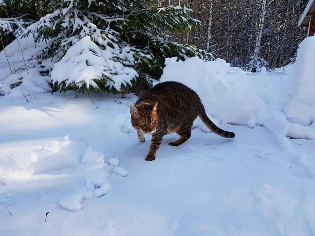 Fun snow by katriak